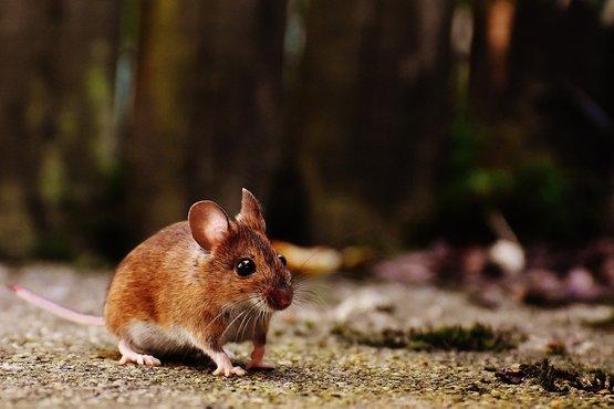 mouse-1708347_1280.jpg